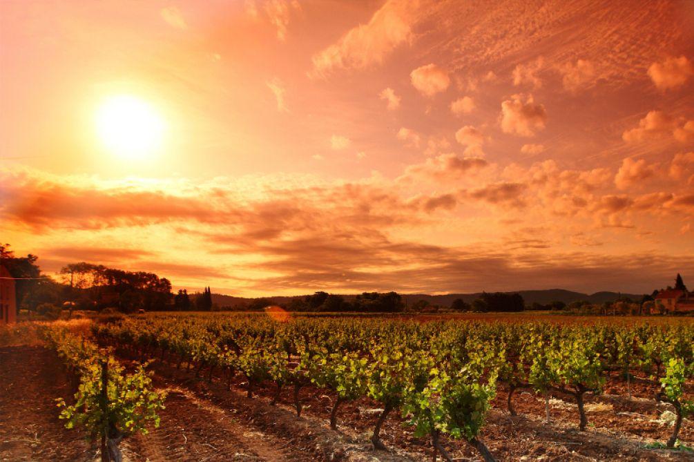 Atardecer en Rioja Alavesa